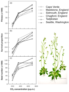 Arabidopsis plants grown at glacial to future CO2 levels. Glacial levels result in reduced fitness measures. Also note that increases between glacial and modern are more severe than increases between modern and future CO2 levels. Taken from Ward & Kelly 2004