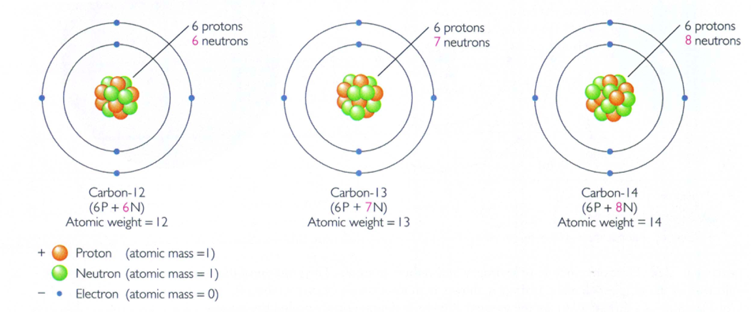 What Two Isotopes Are Used In Carbon Hookup