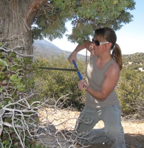 An example of coring a tree (this is a Juniperus occidentallis in southern California)